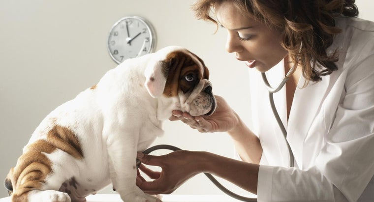 How Do You Maintain a Puppy Immunization Record?