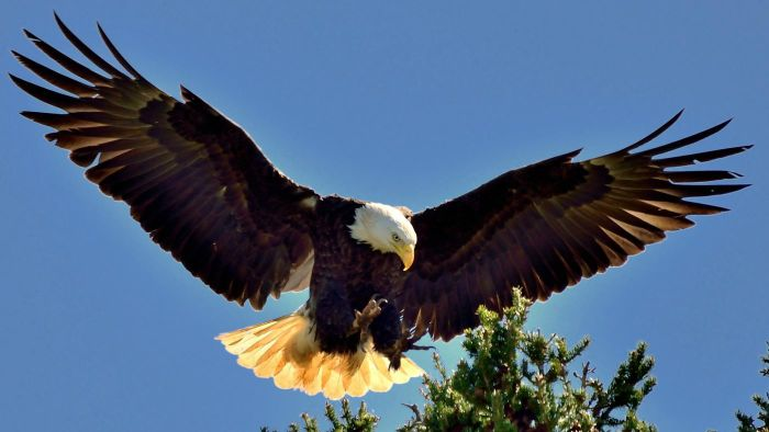 Is There an Eagles' Nest in Berry College?