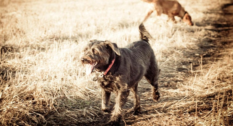 What Do I Need to Know Before Adopting a Rescue Dog?
