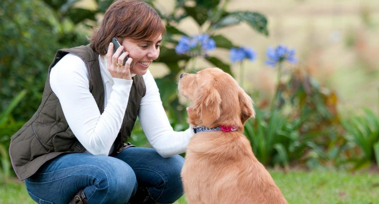 Where Can You Find a Purebred AKC Certified Dog?