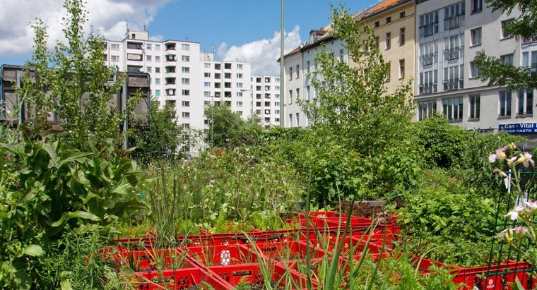 How Can You Turn a Garden Into an Urban Farm?