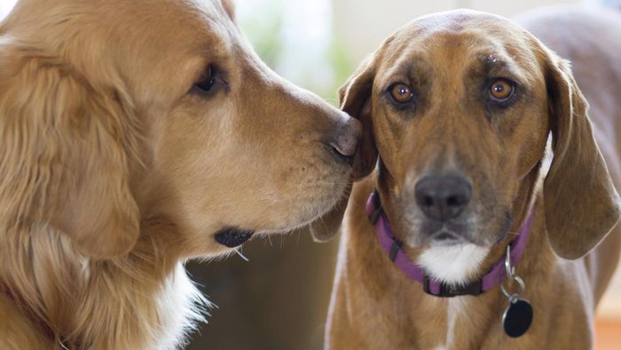 What are some redbone coonhound kennels?