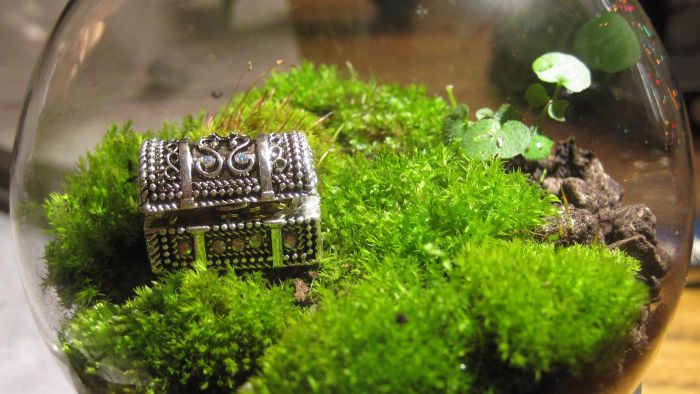 How Do You Make a Terrarium?
