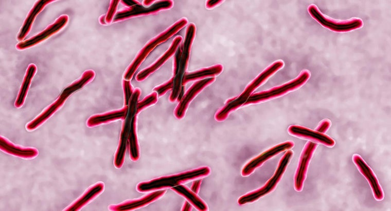 How Do You Tell If a TB Test Is Positive?