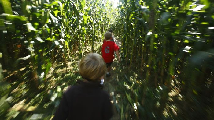 What Are Some Companies That Offer Local Corn Maze Locations?