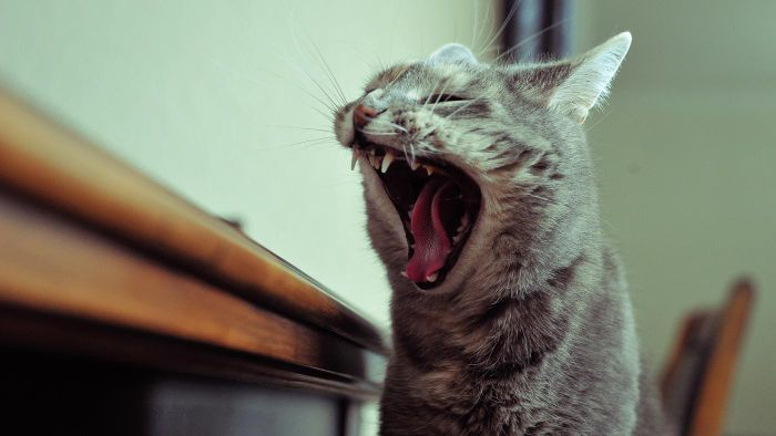 Are There Any Disorders That Cause Excessive Yawning?