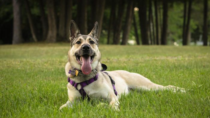 What Do You Do If You Find Little White Worms in Your Dog's Feces?