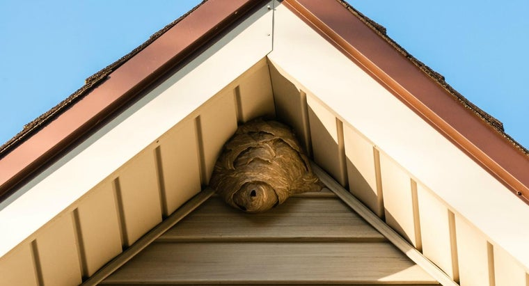 How Do You Get Rid of Wasps in Your Walls?