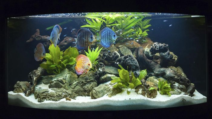 How Can You Find Clearance Fish Tank Accessories?