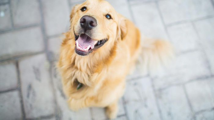 What are some annual American Kennel Club events?