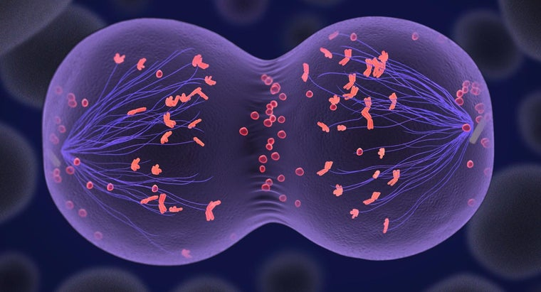 What Are Mitosis and Meiosis?
