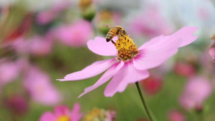 What Are the Benefits of Raw Honey?