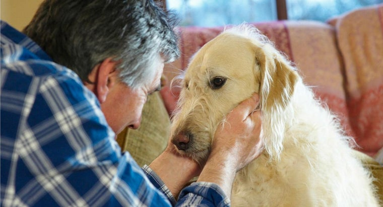 What Are Symptoms of Heartworm in Pets?