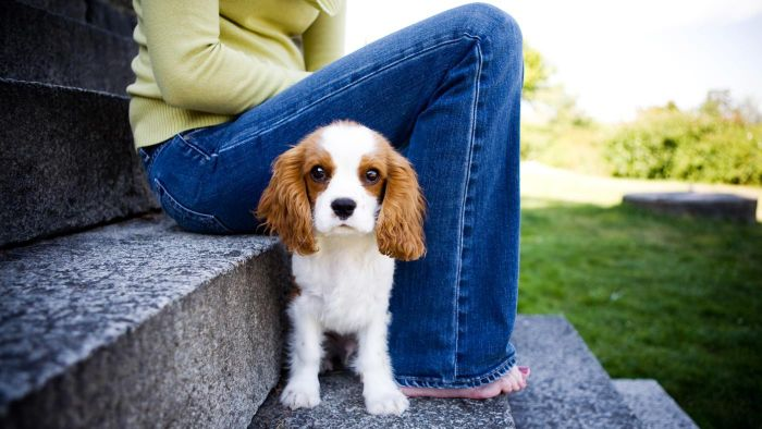What Are Some Reputable Organizations in Ontario That Rescue Spaniel Puppies?