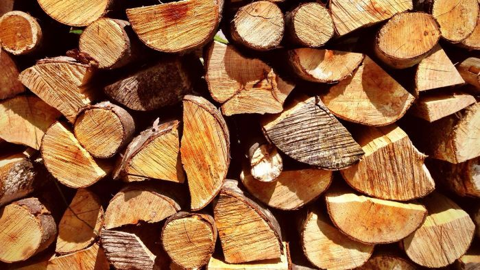 How Can You Get a Firewood Cutting Permit?