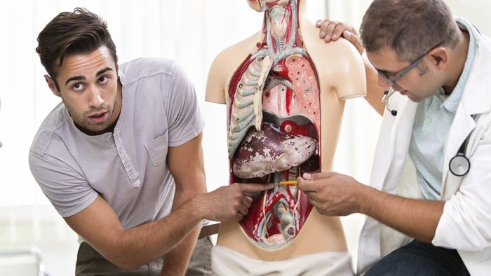 What Organs Are Near the Spleen in a Human?