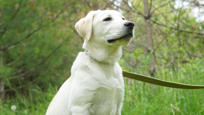 What Are the Requirements for Recognizing an ADA Service Dog?