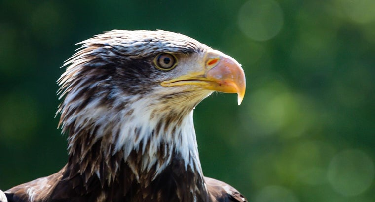 What Are Some Tips for Capturing Photographs of Eagles?