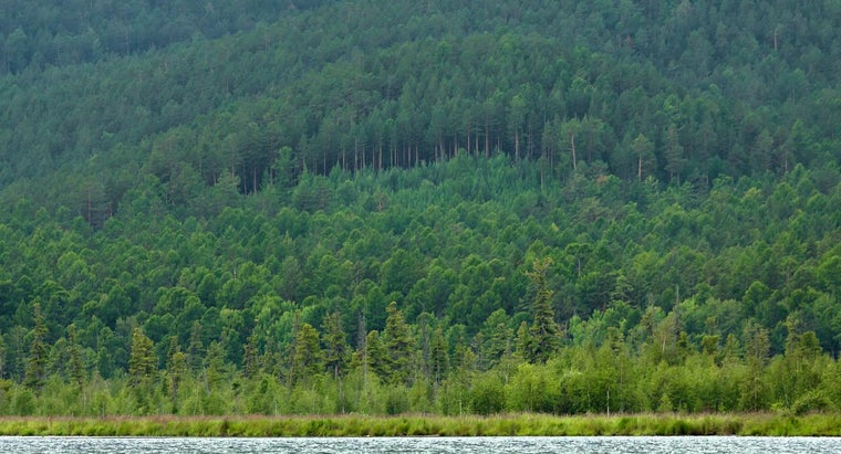 What Trees Grow in Taiga Coniferous Forests?