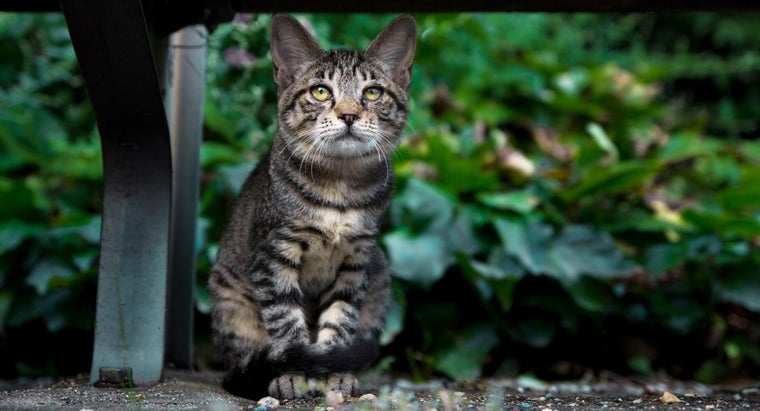 How Do You Build a Feral Cat Shelter?
