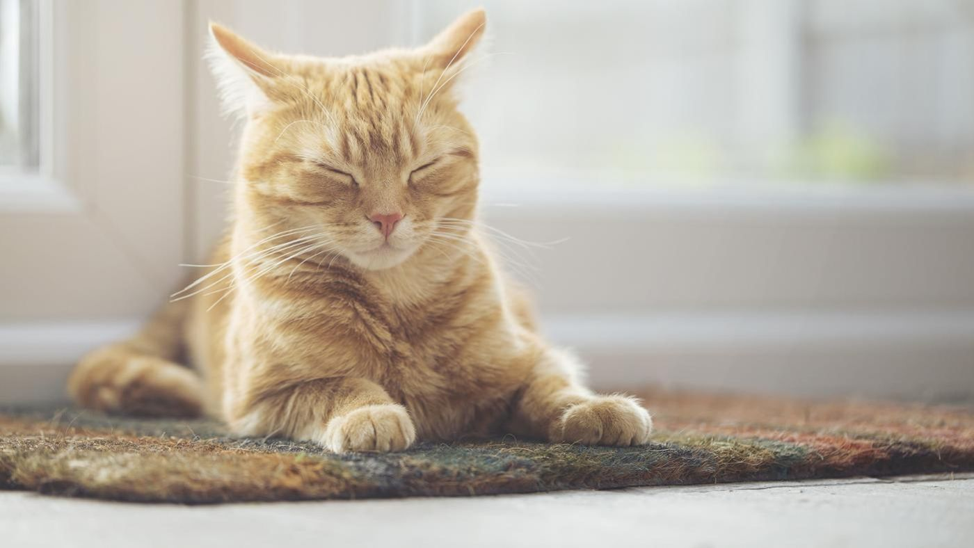 What Are Some Unique Male Cat Names Reference Com