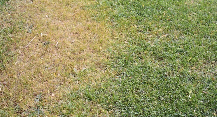 How Can You Tell If Your Lawn Needs to Be Treated for Grubs?