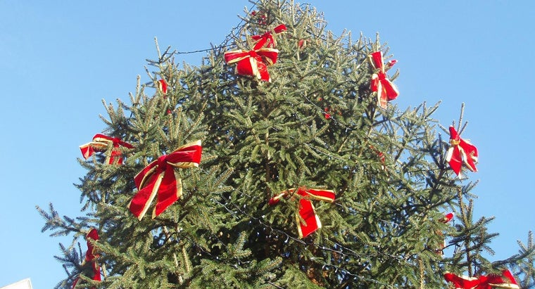 What Is the History of the Christmas Tree?