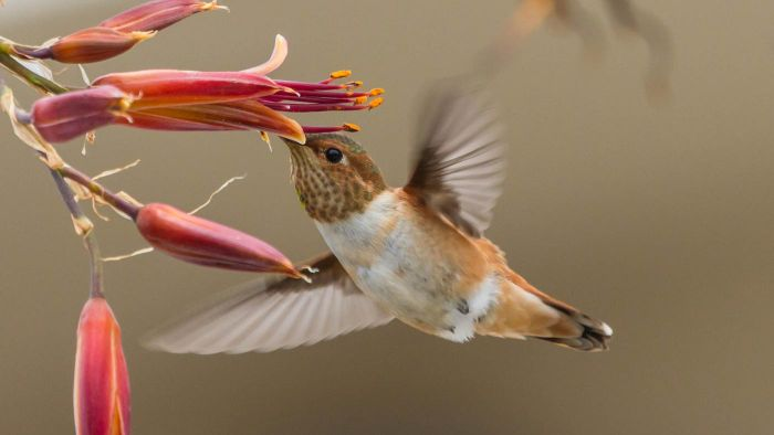 What Are Some Facts All About Hummingbirds?
