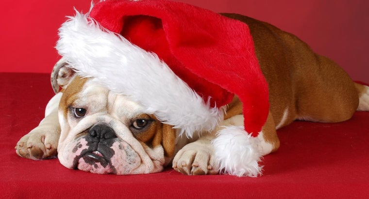 """What Does """"bah Humbug"""" Mean?"""