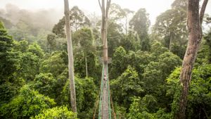 What Is the Climate Like in a Tropical Rain Forest ?