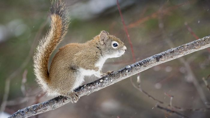 What Are Some No-Kill Squirrel Removal Techniques?