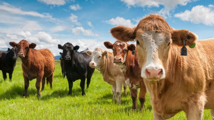 What Is a Cattle Cube Feeder?