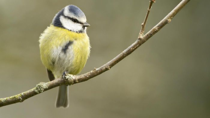 Where Can You Find Free Stock Images of Birds Online?