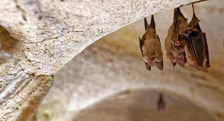 What Is a Bat's Habitat?