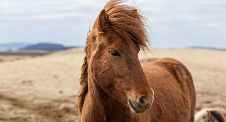 Where Can You Find Horses for Free for Adoption?