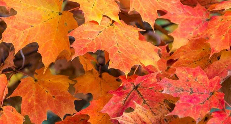Where Can You Find a Map Showing the Peak Fall Foliage of an Area?