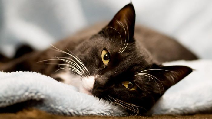 How Do You Eliminate the Smell of Cat Urine on Carpet?