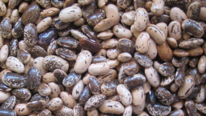 How Long Do You Cook Pinto Beans in a Pressure Cooker?