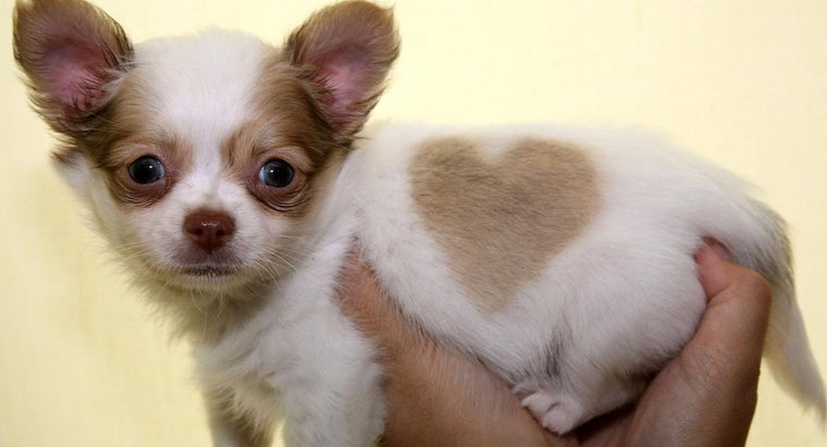 What Are Petland Puppies?