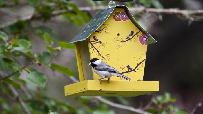What Is an Easy Way to Make a Bird Feeder?