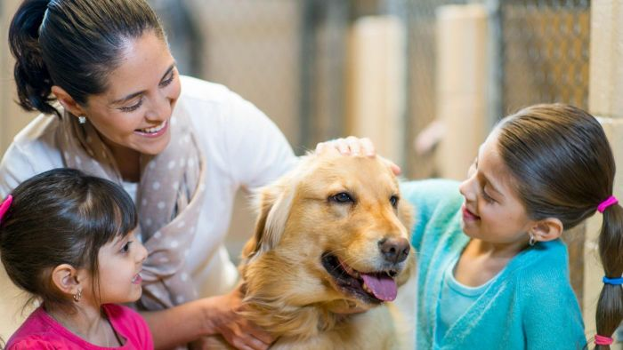 What Are Some Benefits of Adopting Dogs From a Rescue Organization?