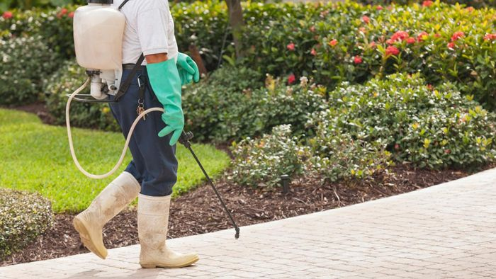 What companies offer pest control in Brentwood, California?