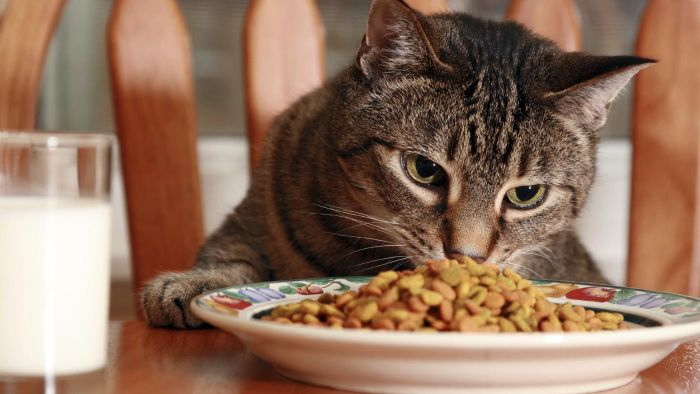 What Animals Eat the Most in One Day?