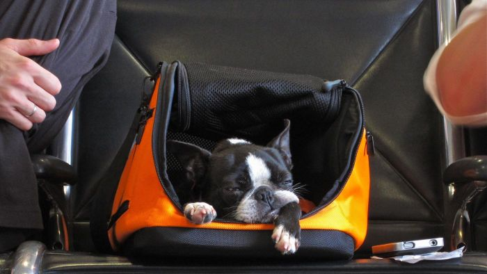What Is the Maximum Size for Carry-on Luggage on an Airline?