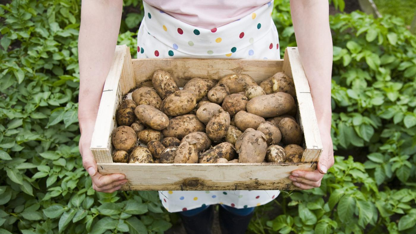 What Are Tips for Finding a Potato's Nutritional Value?