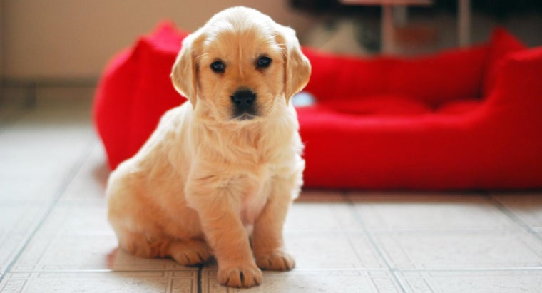Are There Any Breed-Specific Shelters for Golden Retrievers?