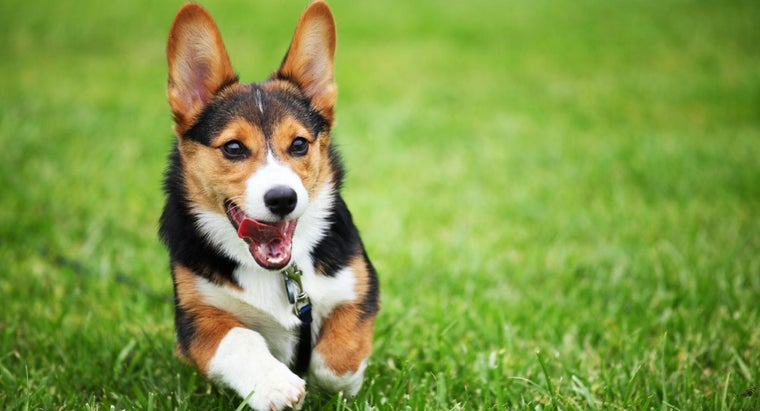 What Are Common Cures for Dogs With Itchy Skin?