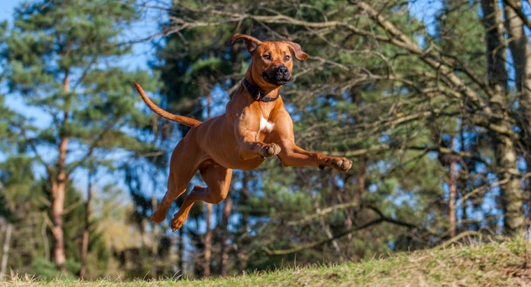 Can Dogs Get Lyme Disease?
