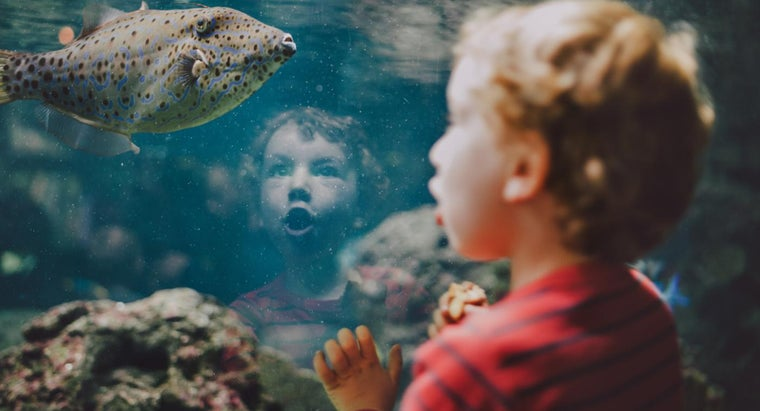What Are Some Facts About Fish for Kids?