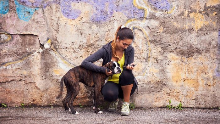 How do you find a boxer rescue near you?